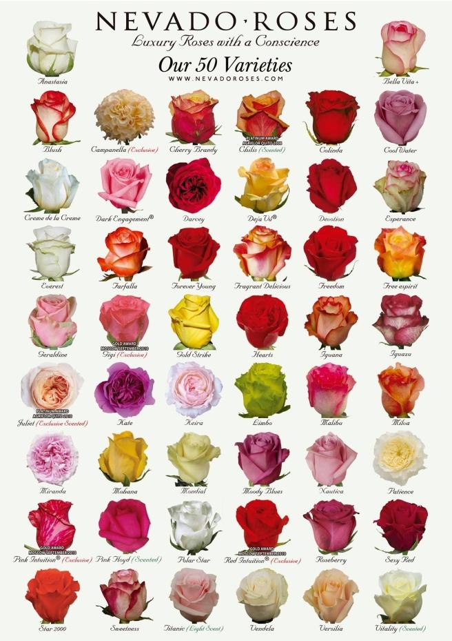 Nevada Roses